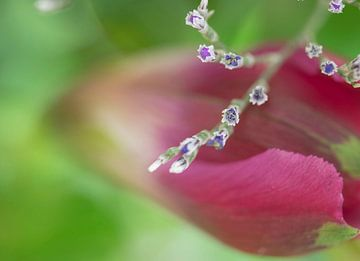 Kleine Diamanten von Denise van Iwaarden