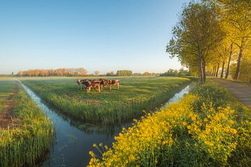 Des vaches dans la prairie sur Moetwil en van Dijk - Fotografie