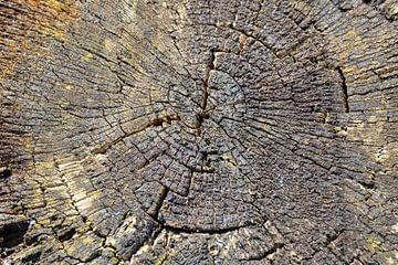 Verwitterter Baumstumpf von Marieke Funke