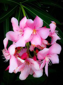 Roze bloemenpracht van Renee Alexandra Serlier