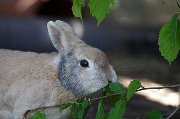 Schattig konijn eet takjes van cuhle-fotos