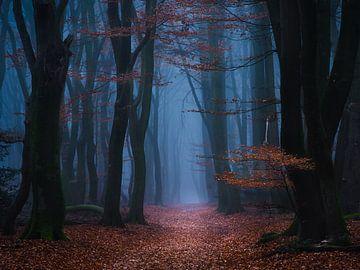 In het bos van Georgios Kossieris