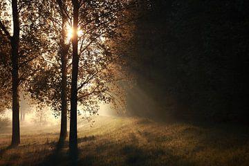 Lichtstimmung am Morgen von Jana Behr