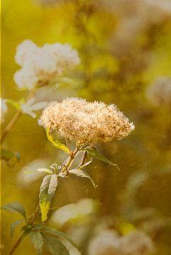 Herfst 2 van Jens Martin