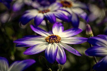 Blume von Rob Boon