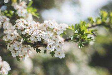 Bloemen wit van Yara Verstappen