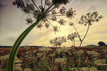 Vegetatie Haase Beemdenbos van Cees van Gastel