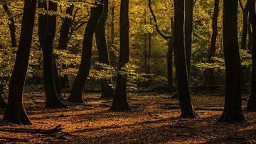 De rust vinden in een onrustig bos van Michel Knikker