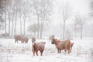 Winterwunderland von Joyce Beukenex