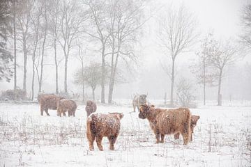 Winter wonderland van Joyce Beukenex
