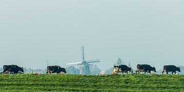 Koeien met molen van Rob IJsselstein