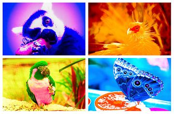 """Pop Art""-achtig Experiment van Kaj Hendriks"