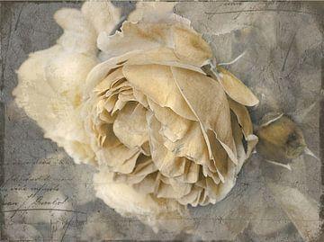 Rose Art #17 van Lizzy Pe