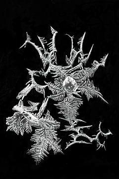 Eiskunst Eis-Kristalle