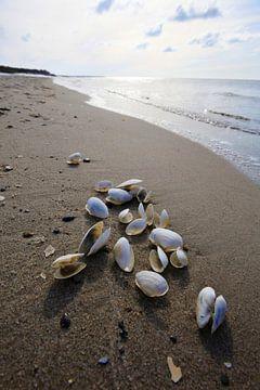 Ostsee mit Muscheln von Thomas Jäger