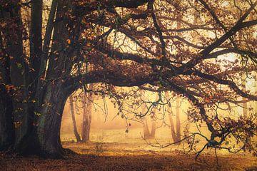 Gouden takken van Joris Pannemans - Loris Photography