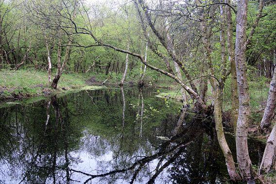 Bos ven van Erik Reijnders