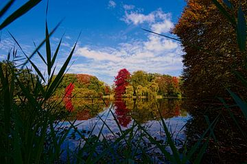 Herfst in Nederland von Leon Eikenaar