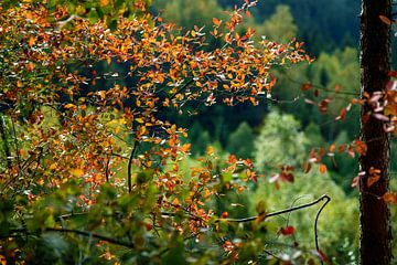 Autumn colors van Richard Marks