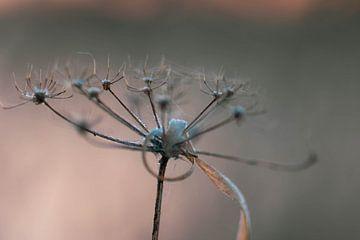 Wildpflanze in der Kälte von Tania Perneel