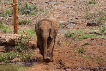 weesolifantje in Nairobi van Daisy Janssens