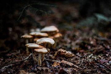 Groepje paddenstoelen van Chris Tijsmans