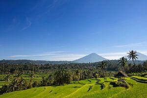 Agung vulkaan zonsopkomst op het eiland van Bali in Indonesië