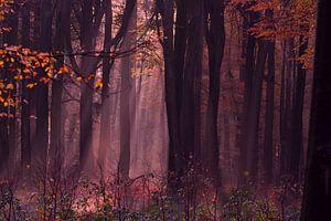 Eenzame herfst