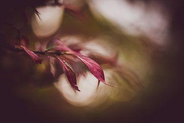 launischer Herbst von Tania Perneel