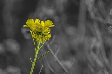 Blume in Istanbul von Oguz Özdemir