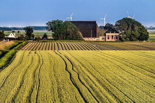 Landschap in Friesland tussen Harlingen en Koehoal van Harrie Muis