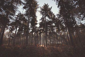 Früher Herbstmorgen im Kloosterbos bei Wachtebeke, Belgien von Daan Duvillier