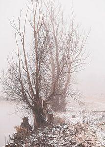 Winterbäume entlang des Rheins von Tania Perneel
