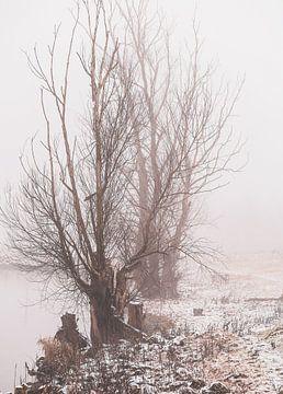 winterse bomen langs de Rijn van Tania Perneel