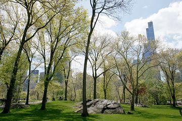 Spring Trees in Central Park, New York van Ton van Buuren