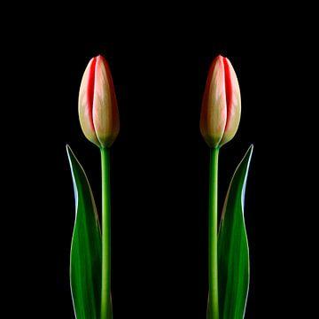 Elegante Tulpen von Thomas Jäger