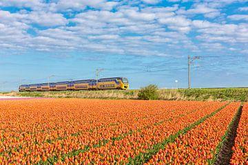 intercity rijd langs de bloembollenvelden van eric van der eijk
