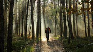 Faire du vélo dans la forêt sur Sran Vld Fotografie