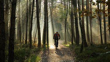 Radfahren im Wald von Sran Vld Fotografie