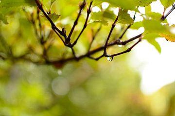 Let it rain von Ricardo Bouman