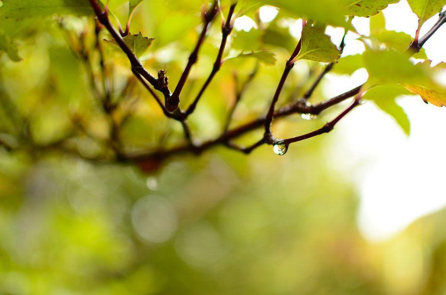 Bladeren in de regen