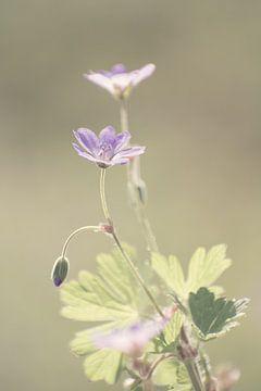 Blumen von Melanie Niessink