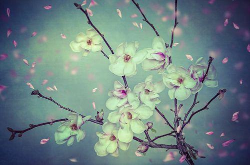 Spring Magnolia van