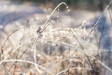 Winterse Bokeh van Ratna Bosch