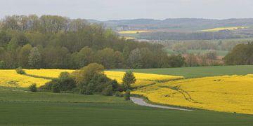 Koolzaadvelden in de Ardennen van Rob Hendriks