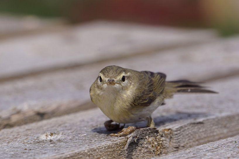 Vogel von Ines Thun