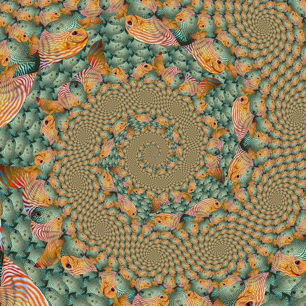 Spiraal van Spiralen van Tropische Vissen van Tis Veugen