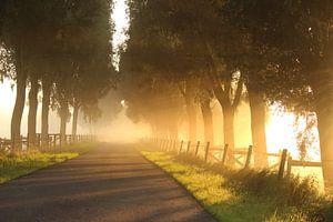Mistige bomendijk in de polder