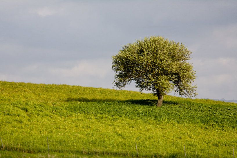 Eenzame boom van Jim van Iterson