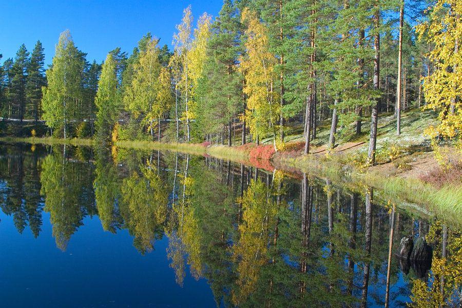Zweedse bomen in spiegel